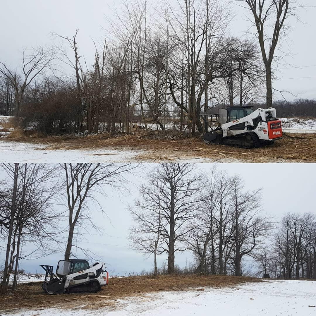 Mono Ontario Tree Removal.jpg